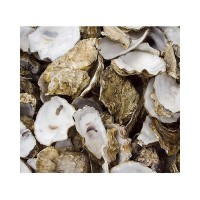 Oyster Shell in Net Bag 5kg